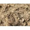 银鸿农业大量求购多花黄精种茎种苗