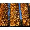 采购大量优质玉米、小麦