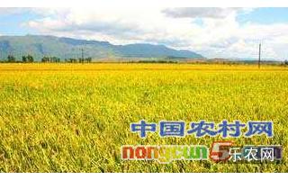 """浙江打造""""竖起来""""的农业科技产业振兴体系"""