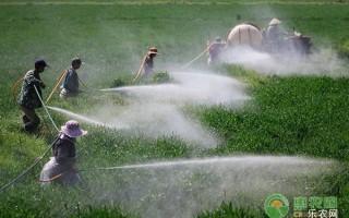 冬小麦不同时期的浇水时间及要点介绍