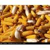 采购大量玉米、稻谷