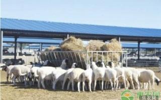 养殖课堂:养羊驱虫的五个误区介绍