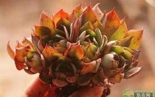 多肉植物怎么缓根?不同品种缓根方法介绍