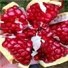 甜籽石榴树苗怎么卖 石榴树找轩园园艺场