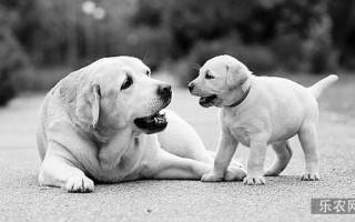 你的狗相当于人类几岁?科学家给出最准公式