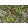 武汉金丰弘玛:禾牧黑斑蛙人工产卵技术
