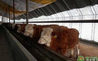 牛舍保暖有哪些好处?如何给牛舍保暖?