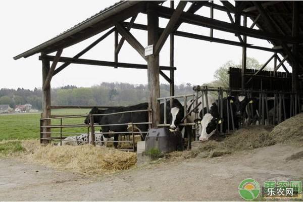 牛舍保暖的方法