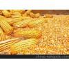 收购大量优质玉米、糯米