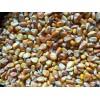 收购大量优质小麦、玉米