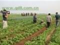 小型蔬菜播种机哪品牌好小型蔬菜精密播种机视频籽粒苋播种机