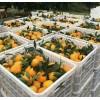 蔬菜水果筐江津市胶框塑料胶框
