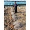 白刺果苗木种植基地,白刺果苗木供应价格,白刺果苗木厂家直销
