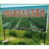 吉林省白刺果苗木基地,白刺果苗木繁育销售,白刺果木种植公司