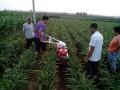 遥控履带式微耕机视频葡萄开沟施肥机手扶拖拉机培土机视频