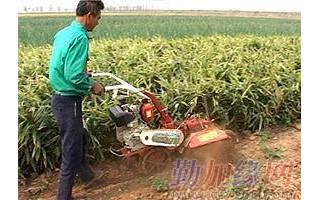 小型开沟培土机威马开沟培土机视频田园管理机开沟培土起垄机