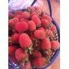 红树莓苗,掌叶覆盆子种植,覆盆子苗批发