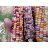 琉璃玉米种子批发,彩色玉米种子,琉璃宝石玉米种子价格