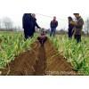 开沟培土机哪个品牌的比较好烟田培土机视频四轮拖拉机培土机视频