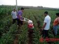 小型开沟培土机价格小型开沟培土机小型开沟培土机多少钱一台