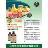 鸡流感用药方案,鸡流感的症状,治疗鸡流感药