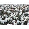 小型摘棉花机视频大型棉花采摘机几百万我爱发明棉花采摘机