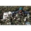 采棉机7660报价大型采棉机多少钱一台国产三头采棉机价格
