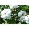 棉花采摘机视频棉花采摘机工作原理棉花采摘机大型多少钱