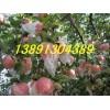 陕西万亩纸加膜红富士苹果产地价格