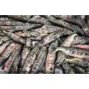 抚远本地大马哈鱼价格,批发速冻大马哈鱼,大马哈鱼批发市场