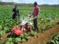 新型开沟机开沟培土机的视频农用开沟机配件开沟培土机哪个牌子好