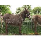 百分百自然水份驴肉 带皮驴肉 脱皮驴肉