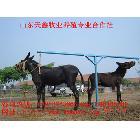 肉驴 肉驴价格 肉驴怎么养殖,肉驴的使用的价值