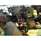 纯正肉驴价格什么种驴好肉驴养殖利润我想养驴投资养驴成本养驴场