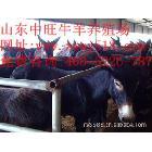 供应肉驴养殖场供应肉驴www.zwmuye.com中旺牧业肉驴养殖场欢迎你