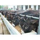 山东肉驴养殖·农户养殖肉驴的品种有多少·改良肉驴出肉率高