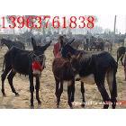 最近山东肉驴什么价位 小毛驴多少钱一头 最大肉驴重量多少