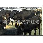 驴价格 种驴的价格 2012年肉驴价格