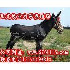 供应肉驴,青海省肉驴养殖场,青海肉驴价格,养驴技术