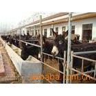 腾祥牧业优惠供应改良肉驴