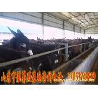 肉驴--供应肉驴养殖技术--肉驴养殖效益