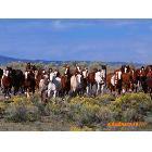 河曲马是优良马种 是良种农用马