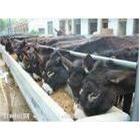 山东兴发牧业改良肉驴养殖、育肥小驴驹