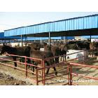 德州驴养殖技术,德州驴的养殖基地,那里的德州驴养殖的用户多