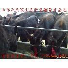 农村创业致富好项目 养殖改良肉驴是财路 育肥肉驴苗风险小利润高