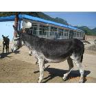 山东肉驴 种驴 品种驴的价格以及技术养殖咨询 到天鑫牧业养殖场