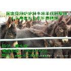 农业养殖致富推荐品种乌头驴肉驴 肉驴育肥