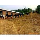 供应驴肉,驴,湖南驴,全国提供驴