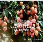 产地直销 新鲜广东高州根子白蜡荔枝1精选 岭南佳果荔枝白蜡
