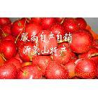 沂蒙2010年新鲜山楂 健脾消食美颜4元/500克
